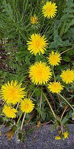 花の画像(自然に関連した画像)
