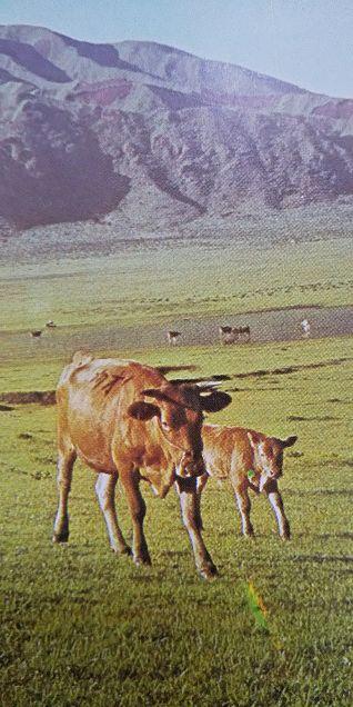小学館図鑑写真×1973年の画像(プリ画像)