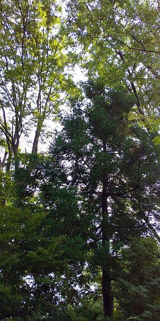 木かげの画像(プリ画像)