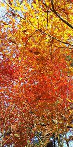紅葉の画像(自然に関連した画像)