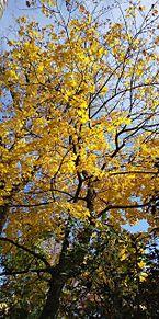 木の画像(自然に関連した画像)