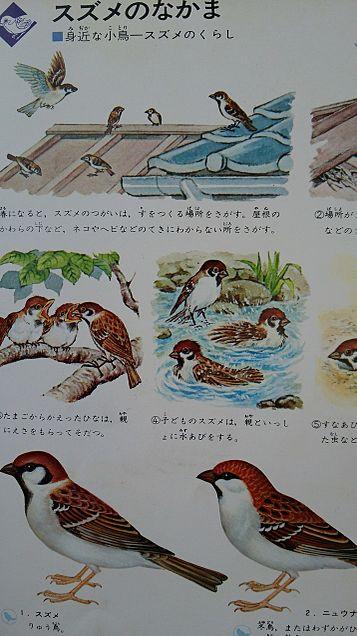 学研図鑑挿絵×1970年
