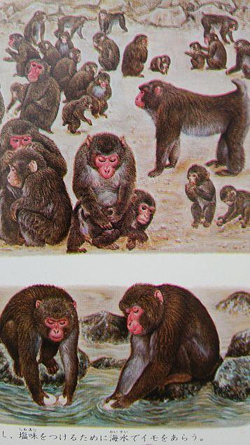 学研図鑑挿絵×1970年の画像 プリ画像