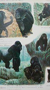学研図鑑挿絵×1970年の画像(プリ画像)