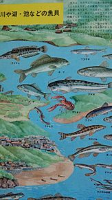 小学館図鑑挿絵×1970年の画像(プリ画像)