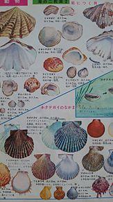 小学館図鑑挿絵×1970年 プリ画像