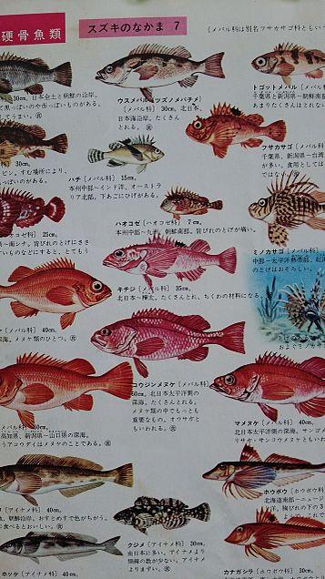 小学館図鑑挿絵×1970年の画像 プリ画像