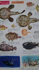 小学館図鑑挿絵×1970年の画像(レトロに関連した画像)