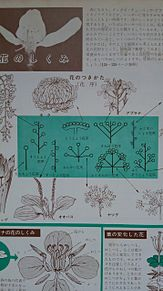 小学館図鑑挿絵×1973年 プリ画像