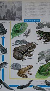 小学館図鑑挿絵×1973年の画像(自然に関連した画像)