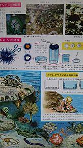小学館図鑑挿絵×1973年の画像(レトロに関連した画像)