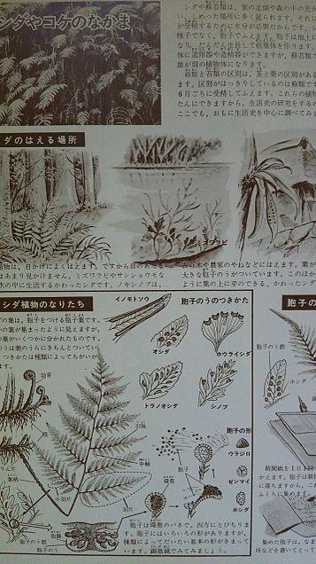 小学館図鑑挿絵×1973年の画像 プリ画像
