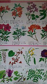 小学館図鑑挿絵×1962年の画像(自然に関連した画像)