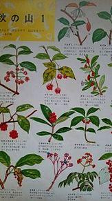 小学館図鑑挿絵×1962年 プリ画像