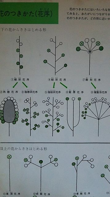 小学館図鑑挿絵×1962年の画像(プリ画像)
