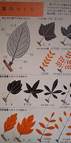 小学館図鑑挿絵×1962年の画像(レトロに関連した画像)