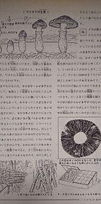 小学館図鑑挿絵×1962年