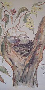 オーストラリアみやげ×2005年/2月の画像(オーストラリアに関連した画像)