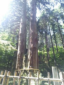 御岩神社の三本杉①パワースポットの画像(パワースポットに関連した画像)