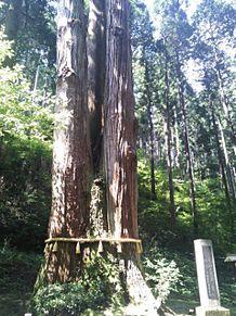 御岩神社の三本杉②パワースポットの画像(パワースポットに関連した画像)