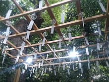 川越氷川神社の画像(パワースポットに関連した画像)