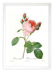 バラの絵画  写真右下のハートを押してね プリ画像