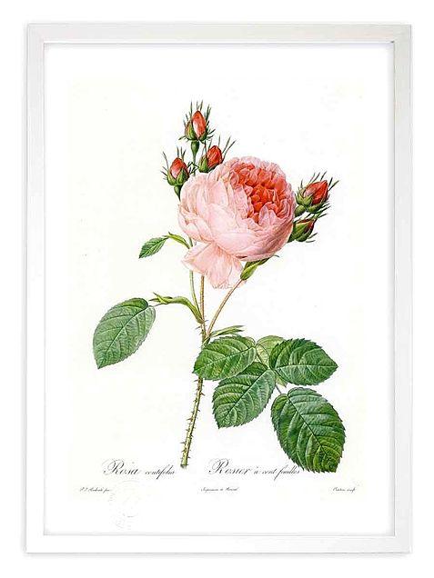 バラの絵画  写真右下のハートを押してねの画像(プリ画像)