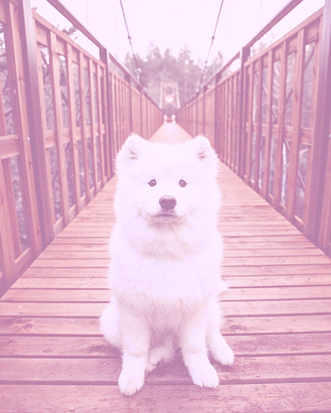 かわいい犬の画像(プリ画像)