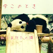 パンダとともに…の画像(恋愛感情に関連した画像)
