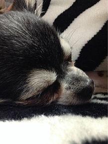 My petの画像(PETに関連した画像)