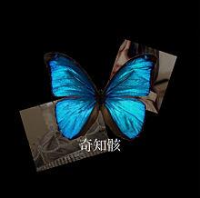 将来の夢  '' butterfly ''の画像(将来の夢に関連した画像)