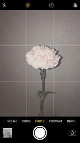お花の画像(花畑に関連した画像)
