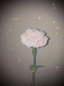 花の画像(花畑に関連した画像)