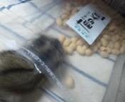 ♡ハムスターお豆食べたい♡の画像(プリ画像)