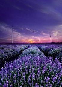 ラベンダー 風景  紫の画像(ラベンダーに関連した画像)