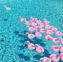 Poolの画像(プリ画像)