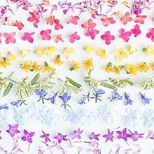Flowersの画像(プリ画像)