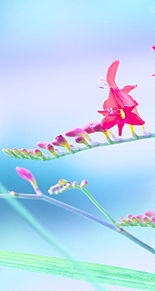 お花の壁紙の画像(プリ画像)