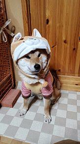 嵐グッズと柴犬癒しの画像(柴犬に関連した画像)