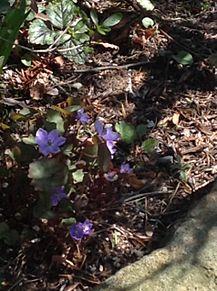 お花(≧∇≦) プリ画像