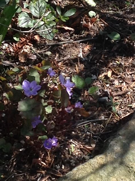 お花(≧∇≦)の画像 プリ画像