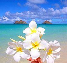 海沿いの花