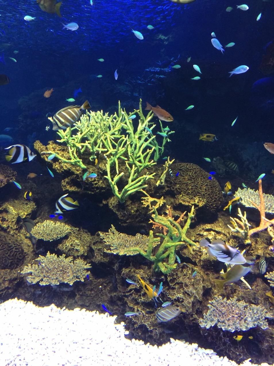 魚やサンゴが美しい透き通った海の中の美しい壁紙・高画質画像まとめ!