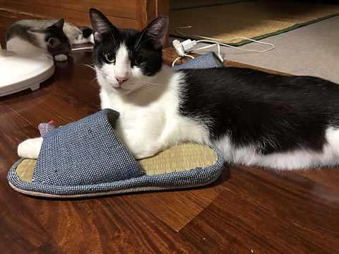 猫!の画像(プリ画像)
