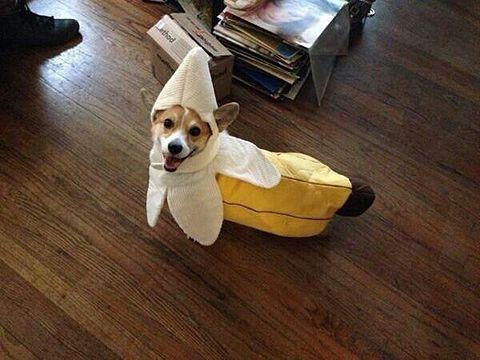 バナナになりましたwの画像(プリ画像)