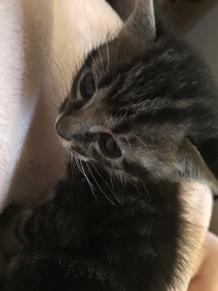 うちの子猫ちゃんです🐱の画像(うちの子に関連した画像)
