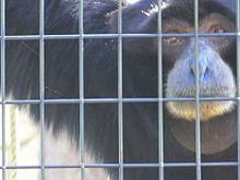 東山動植物園の人気者に会ってきたよ(^-^)vの画像(人気者に関連した画像)