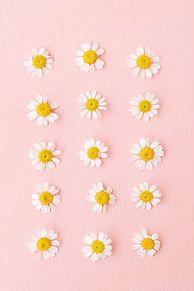 壁 紙の画像(おしゃれ 待ち受け 花に関連した画像)