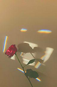 バ ラの画像(薔薇に関連した画像)