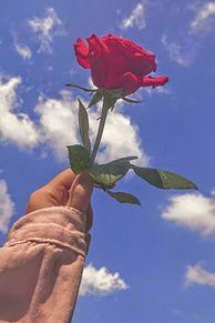 バラの画像(#空に関連した画像)